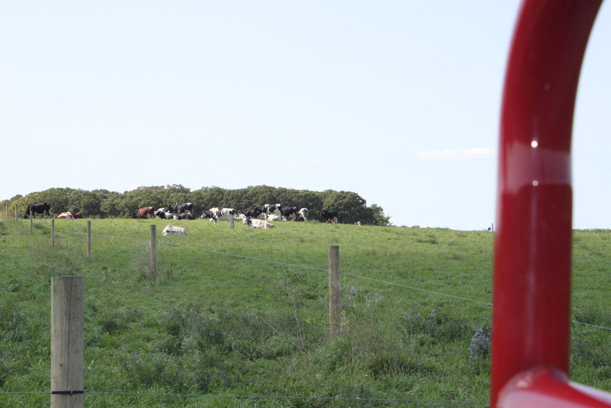Jack Schouweiler's milking cows