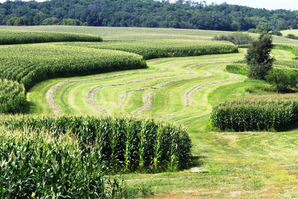 Contour farming in Vernon County