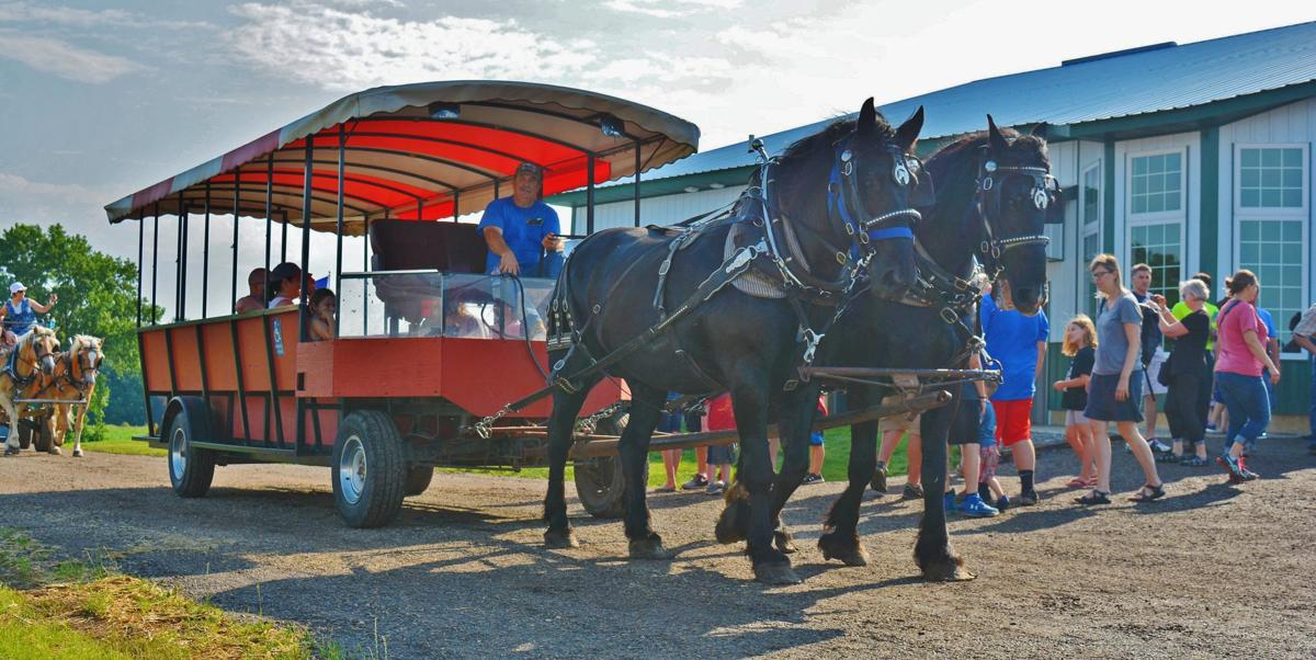 Draft horses take folks to dairy breakfast