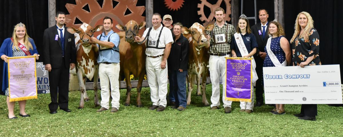 2019 International Ayrshire Show Grand Champion and Reserve Champion cows