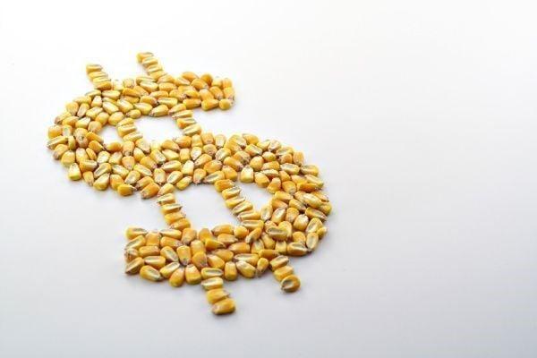 Dollar sign in corn