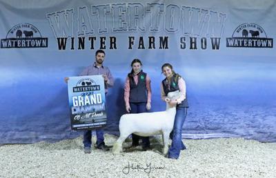 WWFS Sheep
