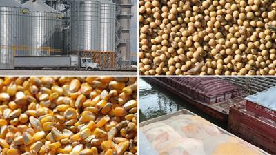 Corn beans quad graphic