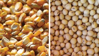 Corn Soybean split screen