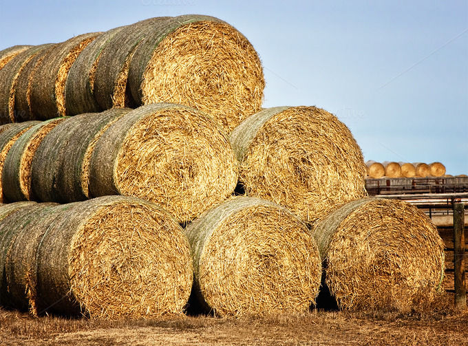 website may take some of the risk out of buying selling hay
