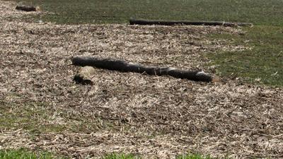 Flood debris cornstalks
