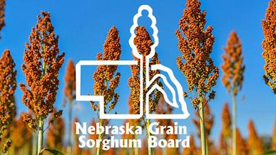 NE Grain Sorghum Board
