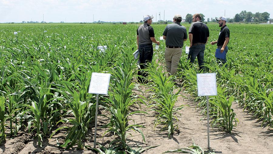 University of Illinois corn