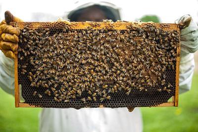 Efforts to help struggling honey bee population gaining momentum