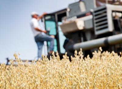 Western Pennsylvania's last remaining estate-grown oats