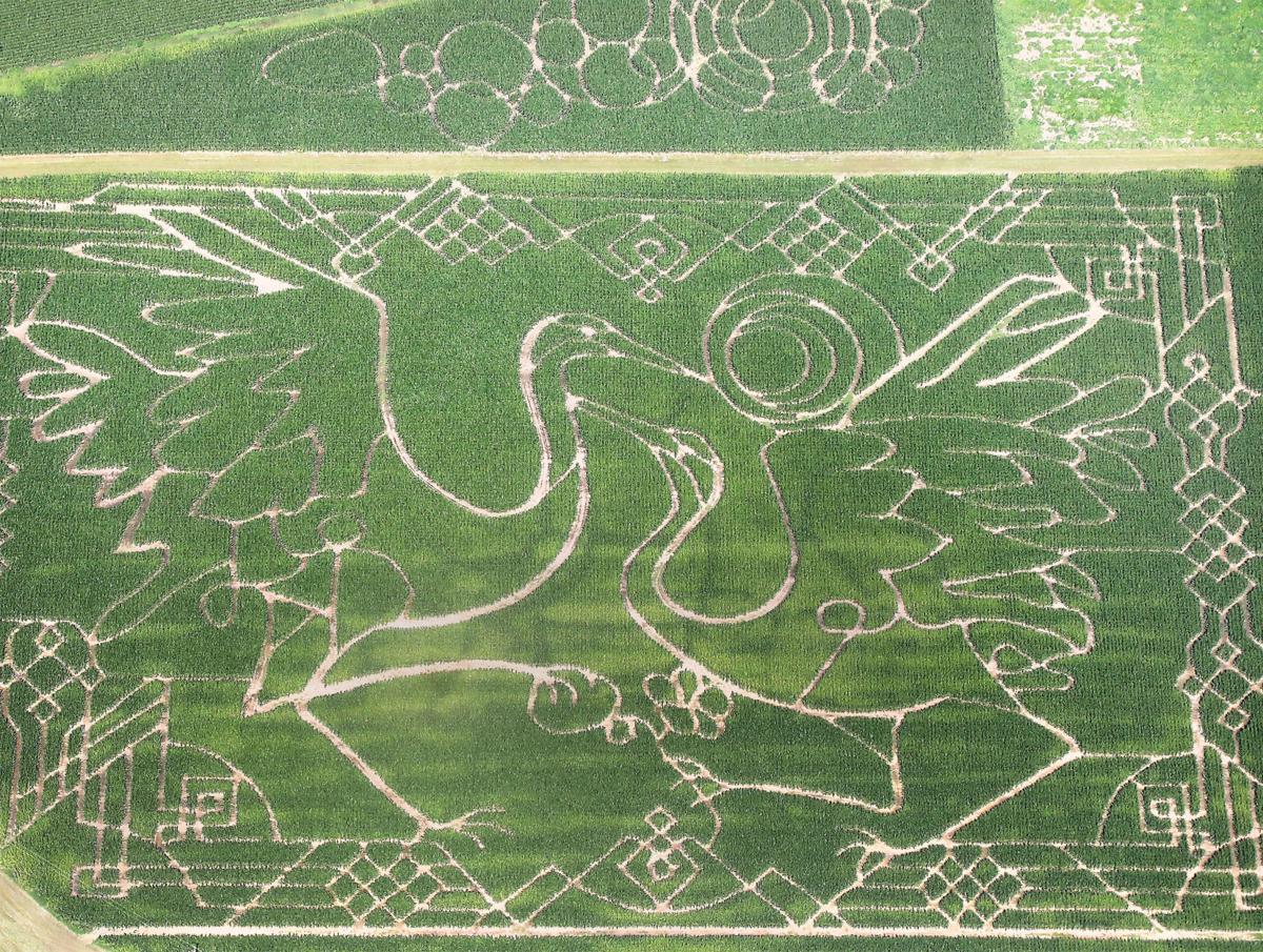 Treinen Corn Maze