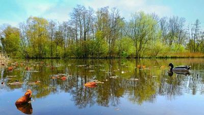 Aquatic plants in farm ponds
