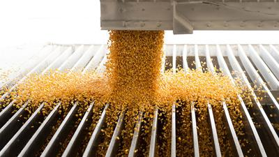 Corn flowing