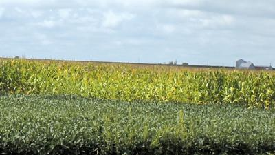 Soybean and corn fields