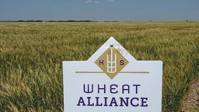 wheat breeding program at the Agricultural Research Center in Hays