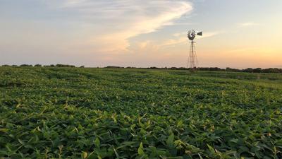 MO crop late summer