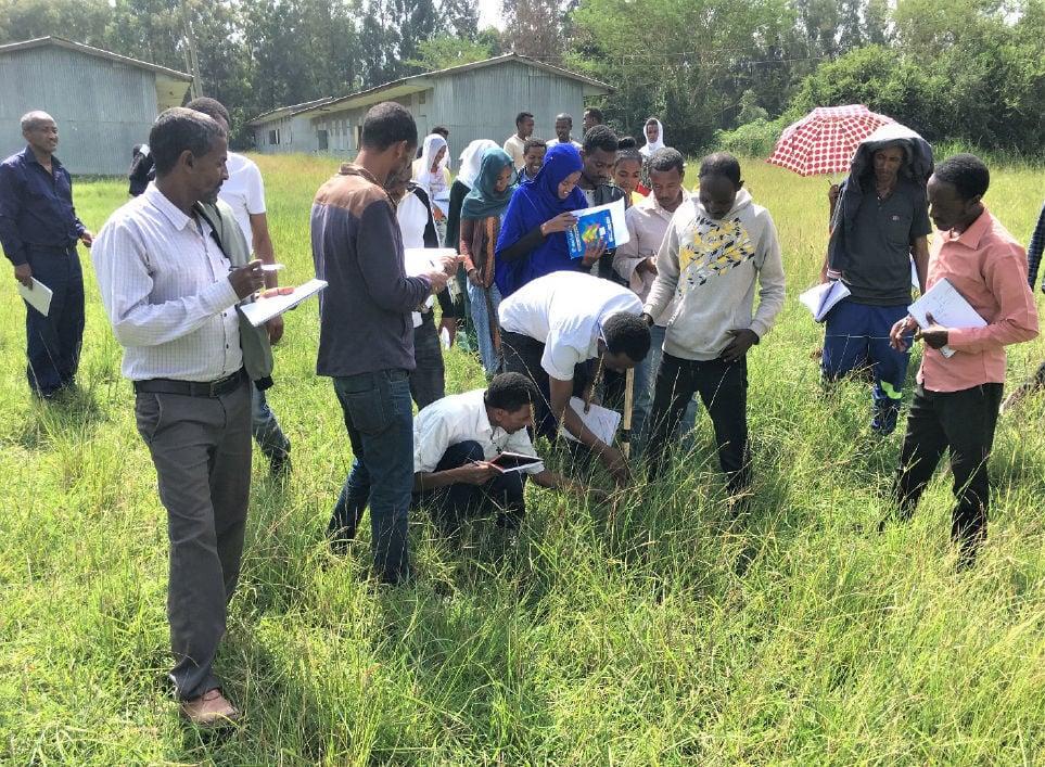 Ethiopian development agents use pasture stick