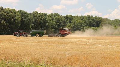 IL wheat harvest