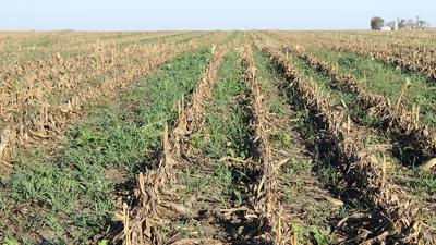 Switching from conventional tillage
