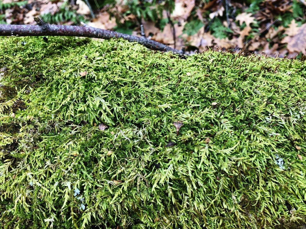 Moss grows everywhere