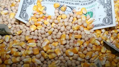 Corn and beans with money