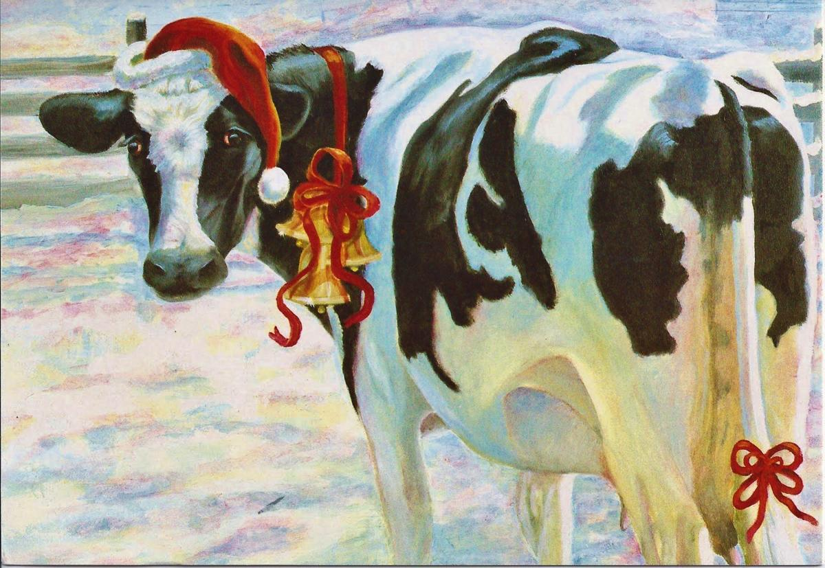 Dairy cow for Christmas
