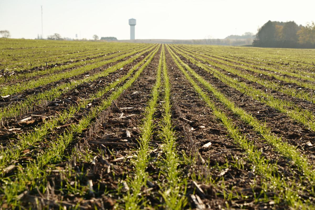 Relay crop planting