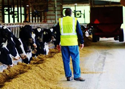 Dairy farmer wearing safety vest
