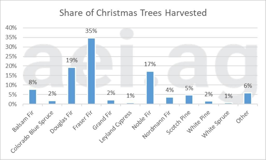 Figure 2. Share of Christmas Trees Harvested, by Species. Source: 2019 Census of Horticultural Species