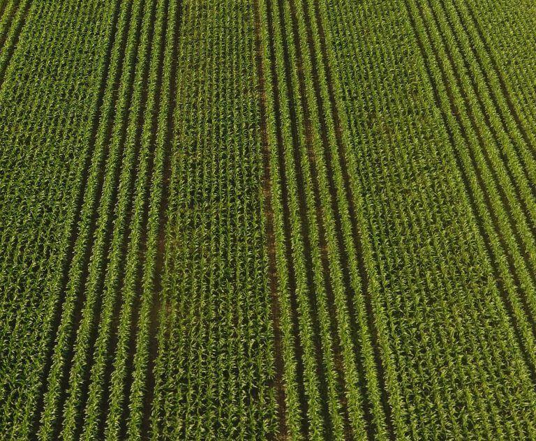 Crop productivity 2.jpg
