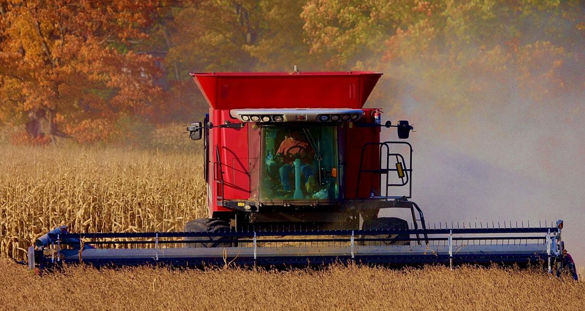 Soybeans harvested