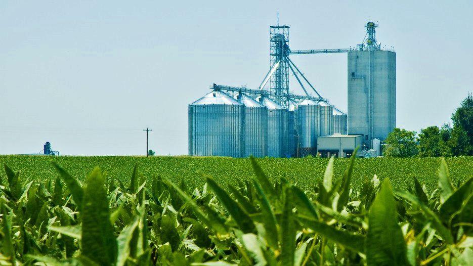 Grain storage, elevator, field crop
