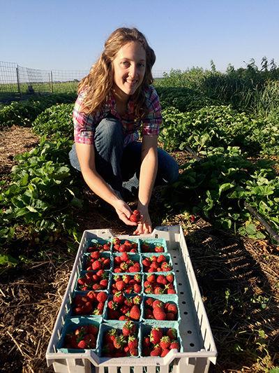 Katie Jantzen strawberries