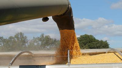 Grain loaded into truck close up