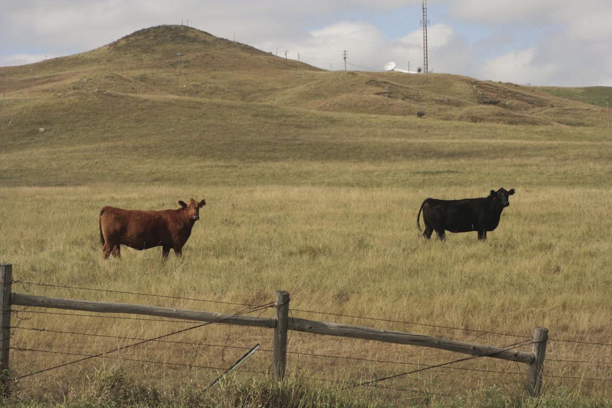 Cattle benchmarking 3.jpg