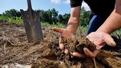 Soil sample with shovel