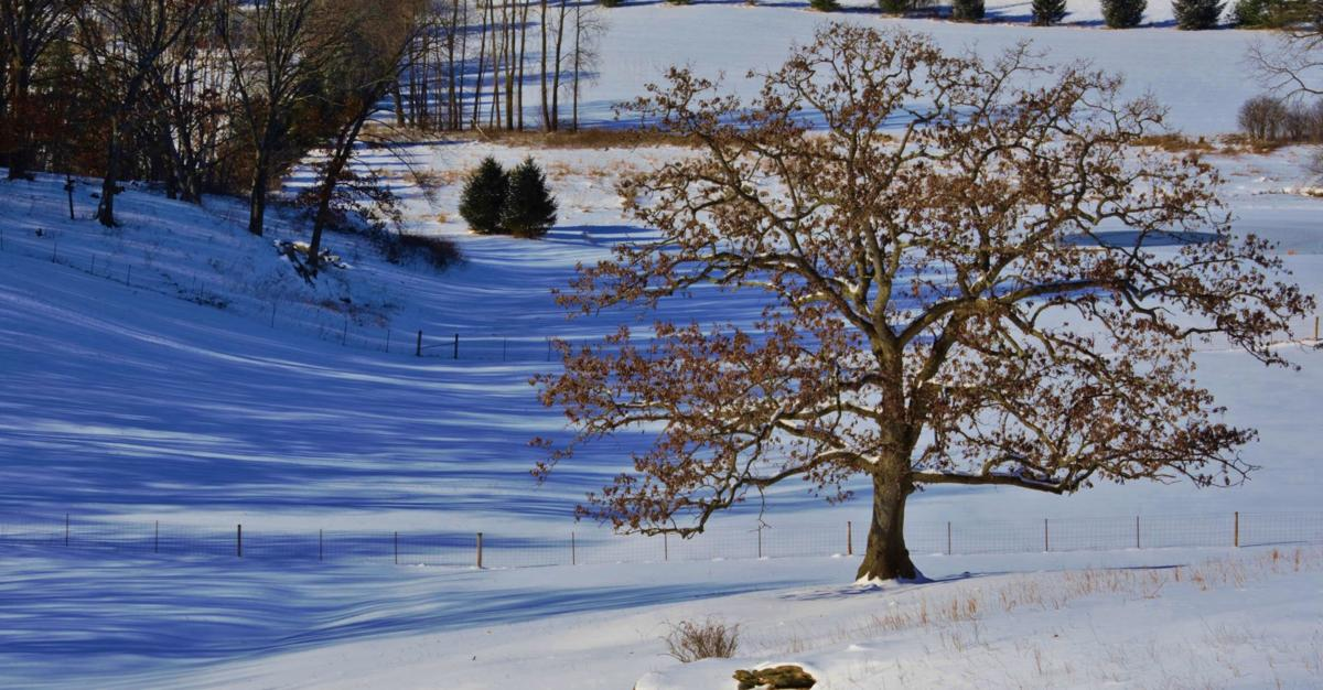 Silent pasture waits for spring thaw