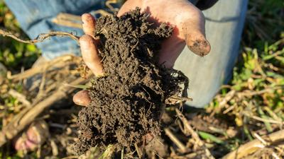 Cover crop hand full of soil