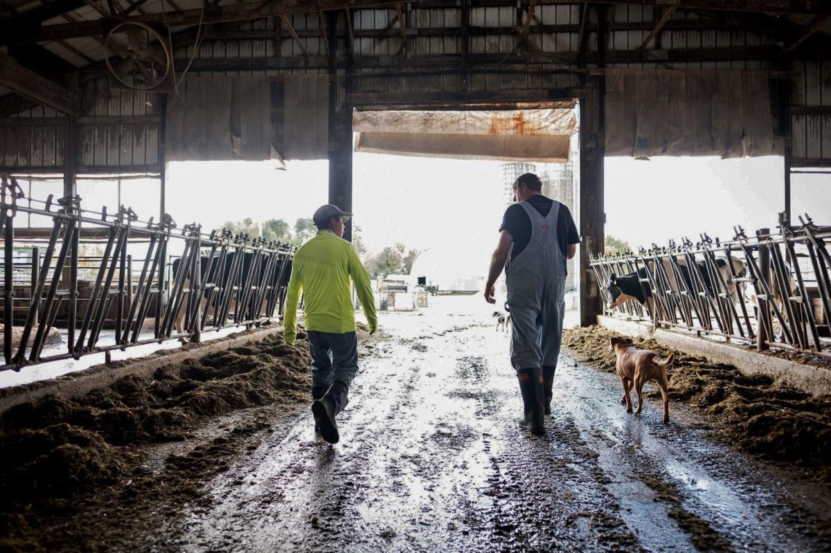 Employees walk through dairy barn