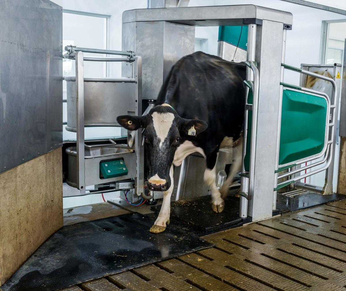 Image result for Milking Robots