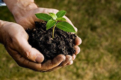 Plant in soil in hands