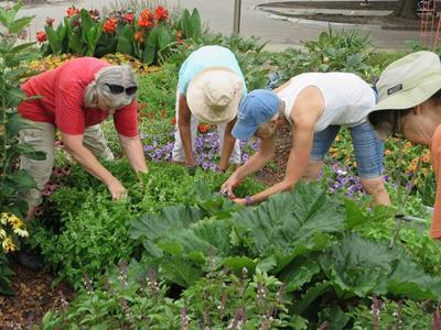 Backyard Farmer Extension Master Gardeners