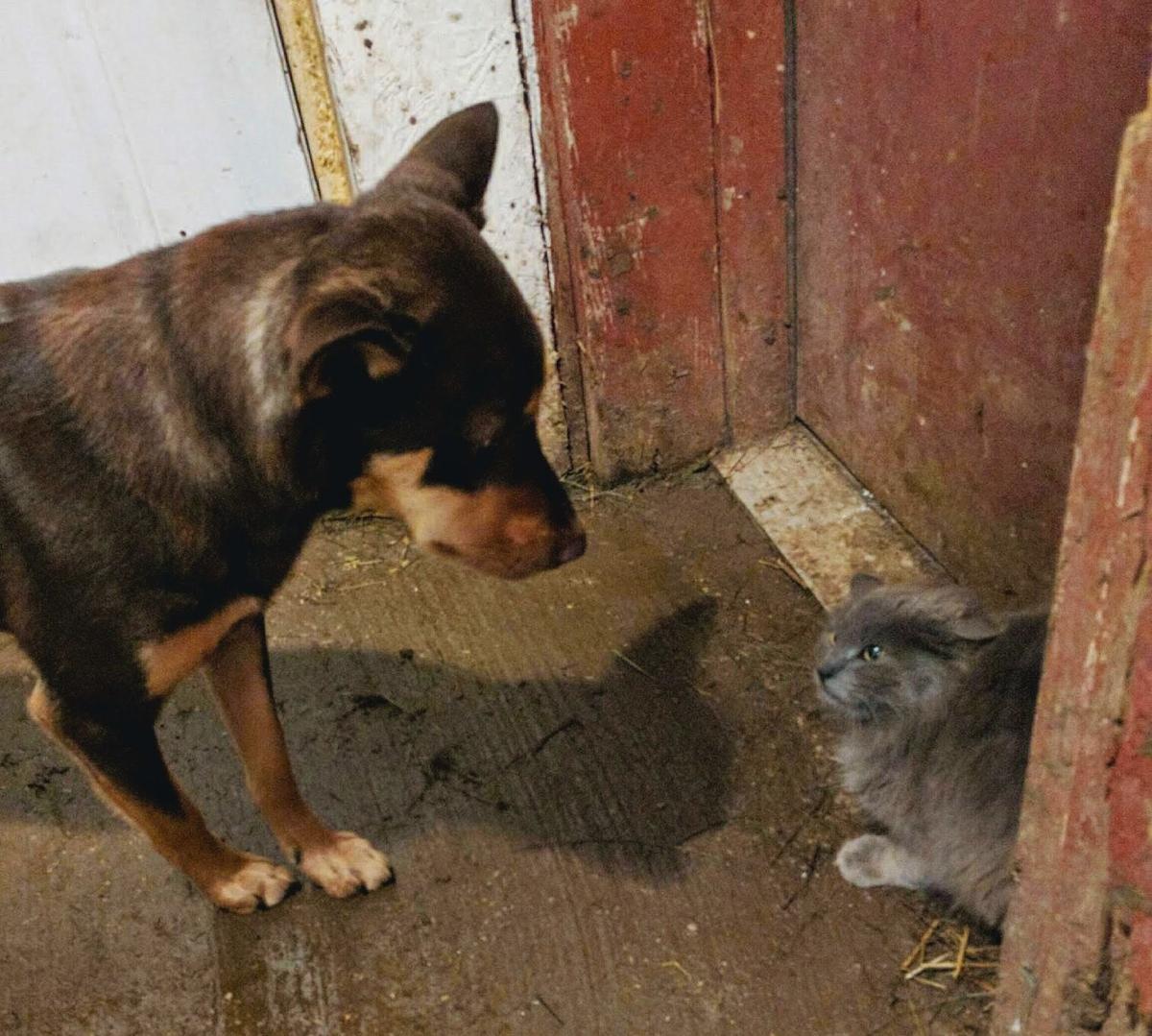 Nala is a Farm Cat Corner member.