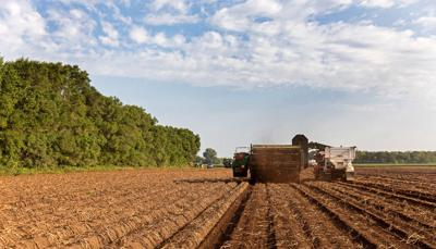 Issue No. 26: Organic potato farming in North Dakota