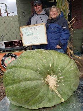 Giant pumpkins a growing interest