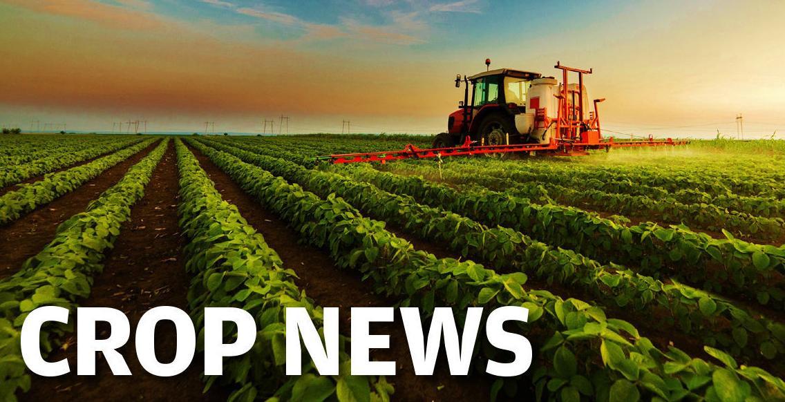 Crop News logo graphic 1