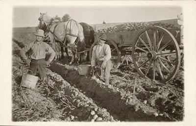 Pests on the Plains: The potato bug