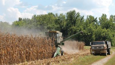 John Gerloff harvests a field of corn