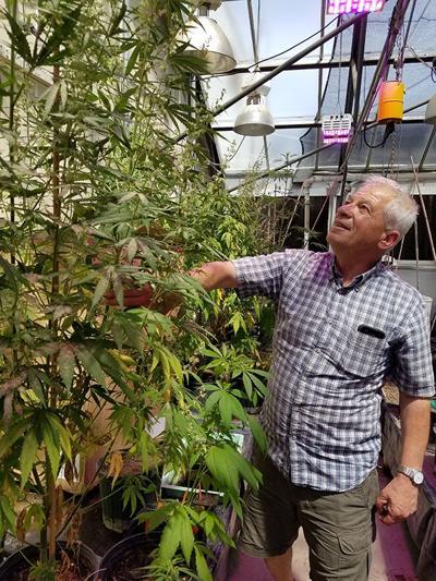 Industrial hemp is a 'go' for Nebraska producers