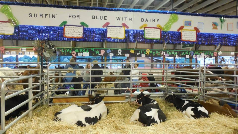 Monroe County Fair livestock